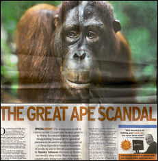The Great Ape Scandal